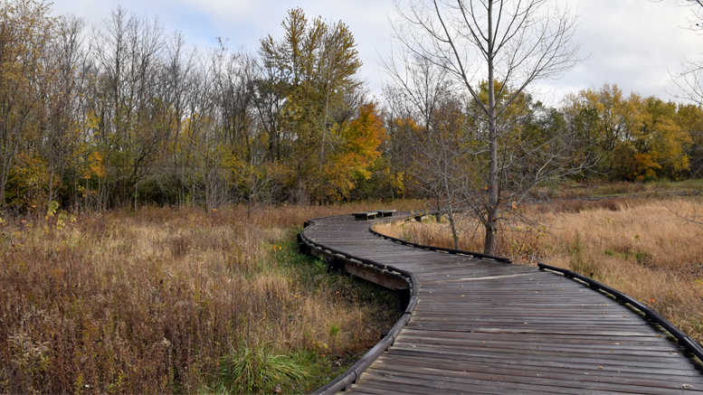 The John M. Craddock Wetland Nature Preserve is pictured. Photo by: Mike Rhodes