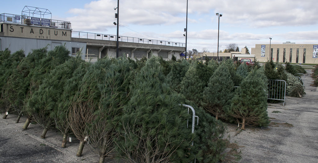 Kiwanis Christmas Trees being arranged on November 22nd. Lots of easy, paved parking. Photo by: Mike Rhodes