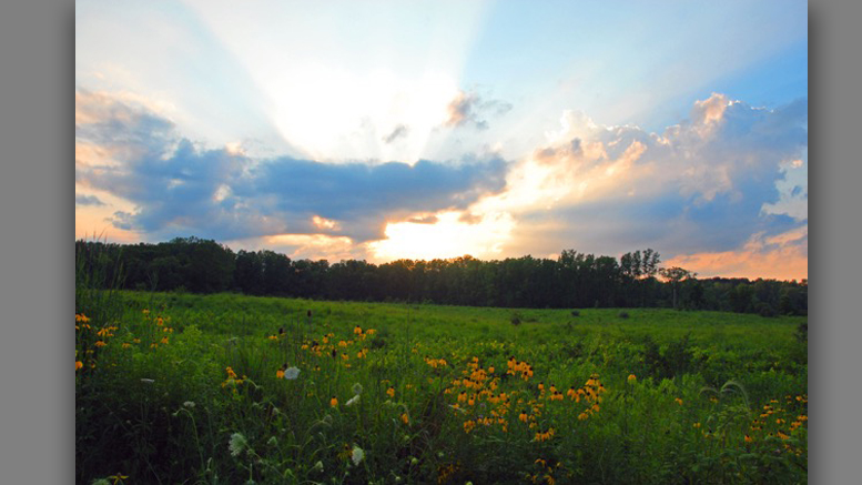 Prairie at Red-tail Nature Preserve. Photo by: Jacob Sewell